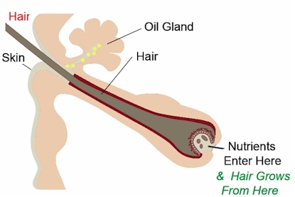 image of a normal hair